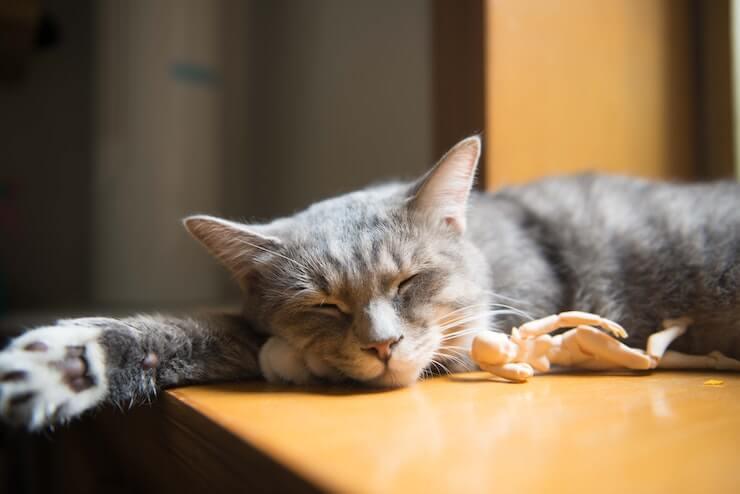 Sleep is Vital for Your Health - Vitality Natural Medicine