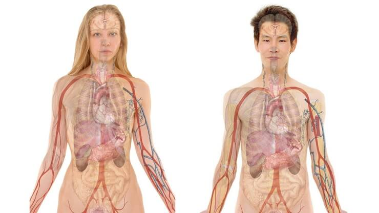 Detoxification 101 - Vitality Natural Medicine